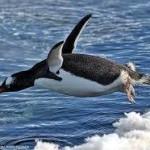 3学期始業式「ファースト・ペンギン」